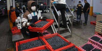 No hay derrame: detectan a 300 trabajadores del arándano sin registrar