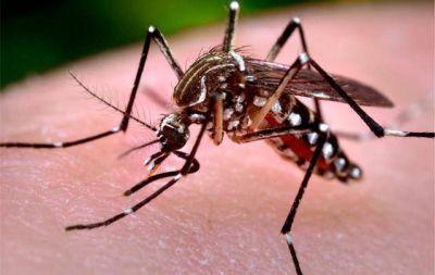 Detectaron en Córdoba dos casos importados de zika
