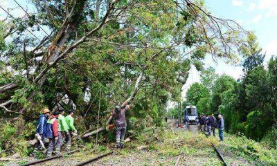 San Fernando removió un árbol caído sobre las vías del Tren de la Costa