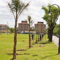 Avanza con �xito el Plan de Forestaci�n en San Fernando