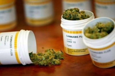 Formalizan la presentación del proyecto para habilitar el uso de marihuana medicinal en la Provincia