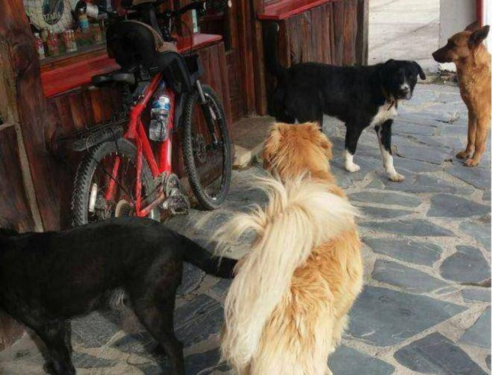 El Municipio hará colocación de chips caninos en las casas y castraciones gratuitas en veterinarias particulares