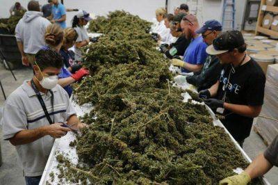 El gobierno santafesino quiere utilizar cannabis en la salud pública