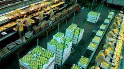 Manzur confía en poder vender los limones tucumanos
