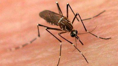 Preocupa al Gobierno la amenaza de una nueva epidemia de dengue y zika