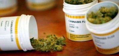 Marihuana medicinal: madres accedieron al alivio por internet