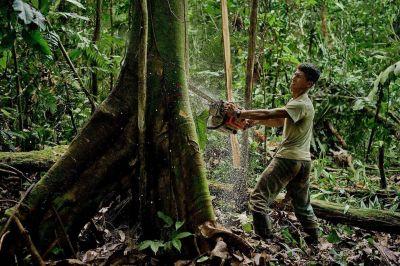 El Papa: Economía al servicio de salvaguardar el ambiente, no lo contrario