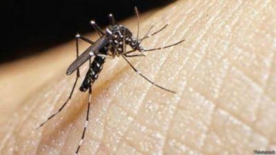 Desde Nación aseguran que en San Juan se investigan dos posibles casos de zika