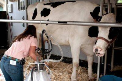 Provincia estipula que en 2017 el precio del litro de la leche subirá a U$S 35 centavos