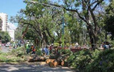 Poda de árboles: la Municipalidad intensifica los trabajos de prevención