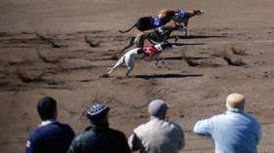 Se aprobó la ley que prohíbe las carreras de galgos