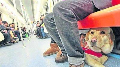 Ya es ley: las mascotas podrán viajar en subte en Buenos Aires