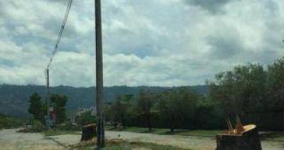 Vecinos de Yerba Buena indignados por tala de árboles en avenida Perón
