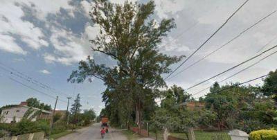 Campero manda a talar árboles sanos y deja algunos a punto de caerse