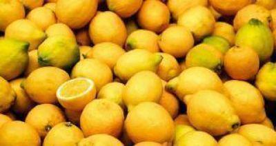 Estiman que el limón tucumano ingresará en la próxima campaña a Estados Unidos