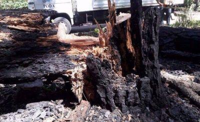 """Denuncian que """"acción irresponsable"""" provocó un incendio en el Bosque Peralta Ramos"""
