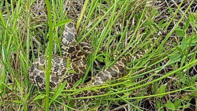 Recomendaciones para prevenir accidentes ante la eventual presencia de serpientes