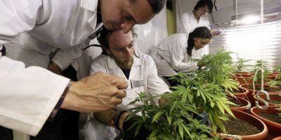 Pacientes salteños piden que se permita el autocultivo de cannabis