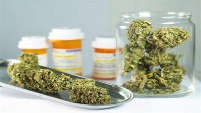 """Una voz local sobre el cannabis medicinal: """"Tenemos esperanza que en 2017 el proyecto pueda ser mejorado"""""""