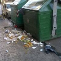 Comerciantes y vecinos denuncian invasión de ratas en Quilmes centro