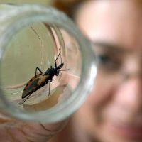 Chagas: se detectaron 5 casos congénitos y 2 niños sufrieron picaduras de vinchucas