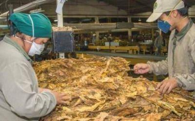 Productores temen que adhesión a la ley antitabaco los perjudique