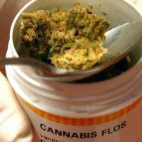 En la provincia el Aceite de Cannabis será medicamento alternativo