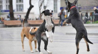 Córdoba: proteccionistas culpan a funcionarios por la proliferación de perros en las calles