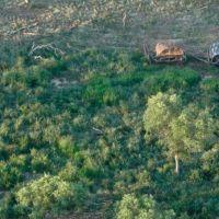 Repudios a la Ley de Bosques: aseguran que podrían arrasar cientos de hectáreas