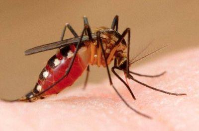 Sospechan de más casos de dengue y leptospirosis en la provincia