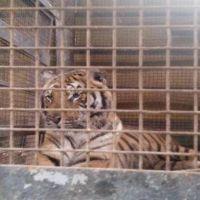Prohiben circos y zoológicos con animales en territorio riojano