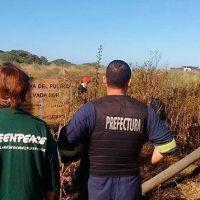 """Desde Greenpeace denuncian que """"la Reserva del Puerto continúa amenazada"""""""