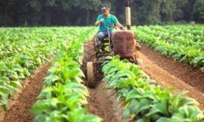 La Nación firmó y se destrabaron los fondos para el pago de los productores tabacaleros