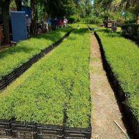 Este miércoles inicia la forestación de los algarrobos chaqueños en la Cuenca del Morro