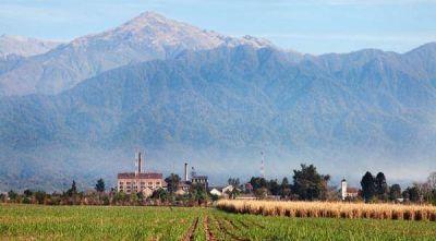 Más de dos mil técnicos de caña de azúcar llegarán a Tucumán