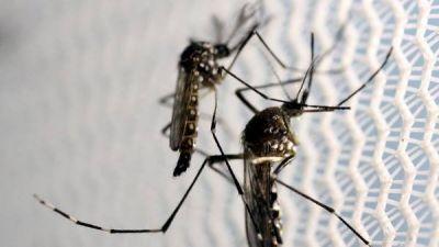 Estudian un probable caso de bebé con microcefalia por zika en Buenos Aires