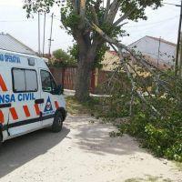 El fuerte viento provocó la caída de árboles y cables en distintos barrios