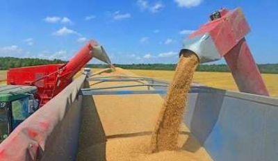 Efecto trigo: la producción de Balcarce iría al mercado brasileño