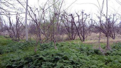 La fruta perdió 19.000 hectáreas en las últimas seis temporadas