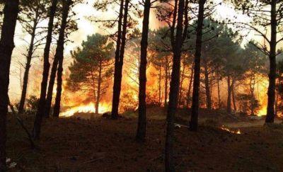 Incendio en Valeria del Mar: el fuego ya consumió 50 hectáreas y piden evacuar la zona