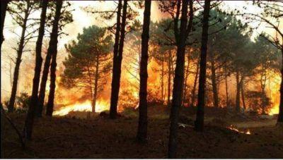 El voraz incendió fue controlado: afectó 50 hectáreas de Valeria del Mar