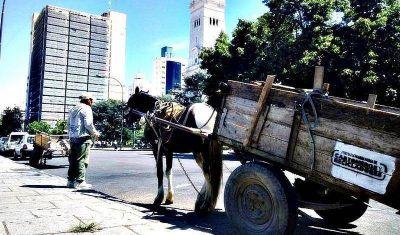 Cartoneros advierten una embestida municipal en su contra y preparan marcha con sus caballos