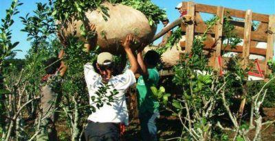 La yerba mate está entre las economías regionales con mayor caída de exportaciones en el país