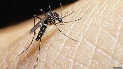 Continúan las acciones de prevención de zika, dengue y chikungunya