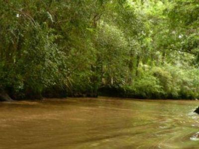 Una Ley de Bosques para la provincia de Buenos Aires