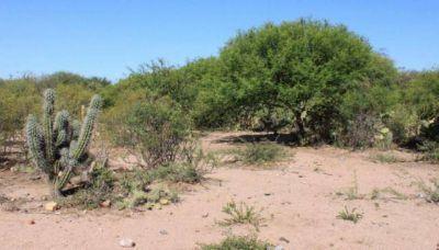 Cuatro claves del anteproyecto de ley de bosques