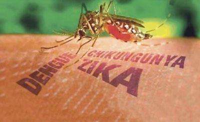 Nación entrega a las provincias más insumos para luchar contra el dengue