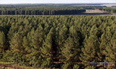 Durante 2016, Corrientes recibió cerca de $60 millones para planes forestales