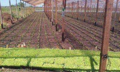 Operativos por el uso de los agroquímicos y la instalación de invernaderos sin control