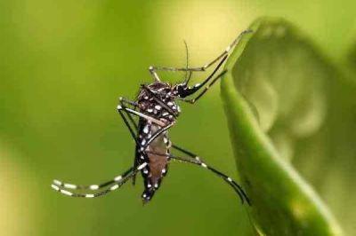 Intensifican la campaña para prevenir dengue y zika